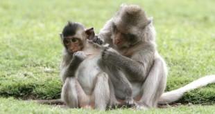 Création de singes transgéniques pour le traitement de l'autisme